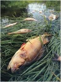 poisson-asphyxie