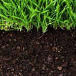 agriculture-bio-e1433158484681