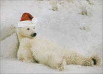 polarbearchristmas