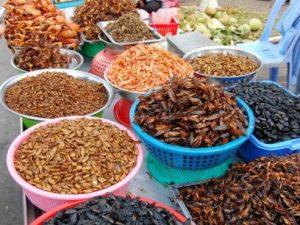 mangez-des-insectes-de-thailande