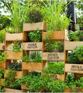 urban-gardens