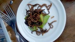 insecte-paris-restaurant